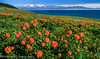 Sea Of Flowers @ Sayram Lake, Xinjiang China by Feng Wei Photography