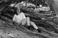 Tish in a Tree