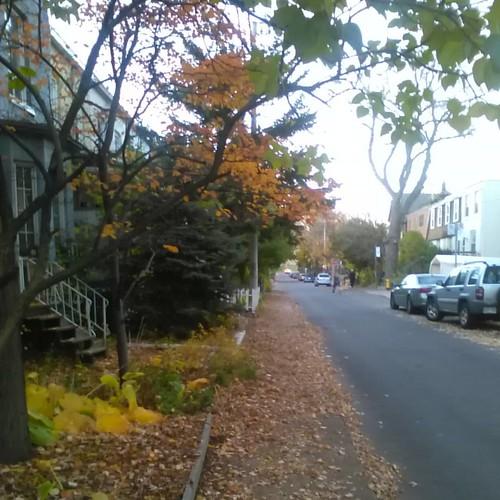 Sidewalk leaves, Munro Street #toronto #evening #autumn #munrostreet #riverdale