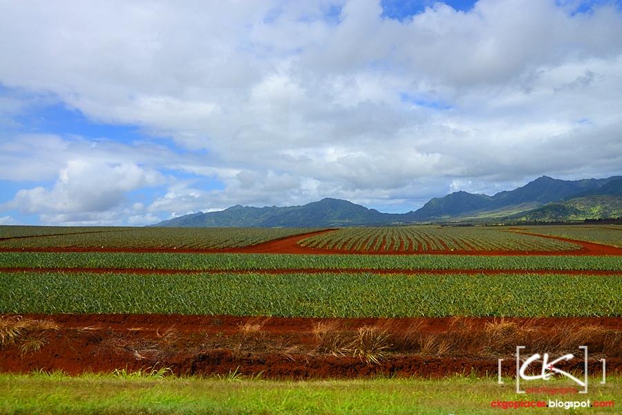 Hawaii_0164