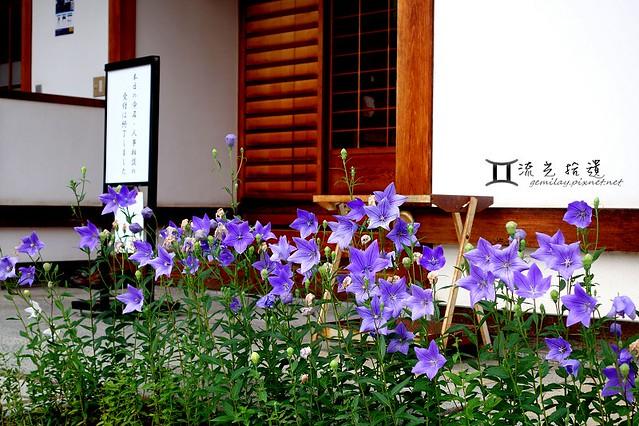 京都 鴨川、晴明神社 (9)
