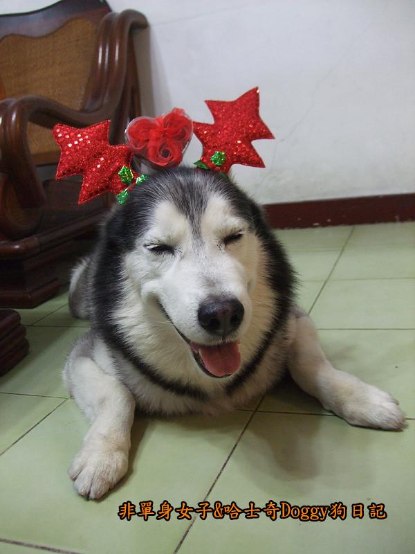 Doggy聖誕節紅色聖誕樹髮箍裝扮16