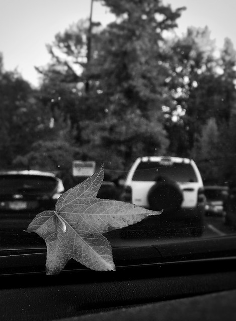 Fall - Simple as B&W