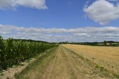 Entre champs de blé après moisson et de maïs