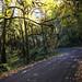 Otto Miller Road in fall.jpg by BikePortland.org