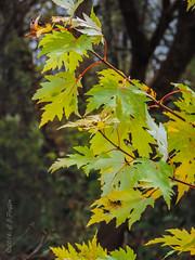 Trees/foliage