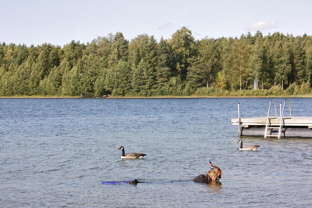Sääksjärvi snorklaus