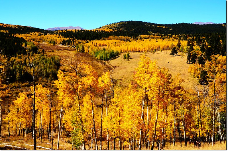 Fall colors at Kenosha Pass, Colorado (28)