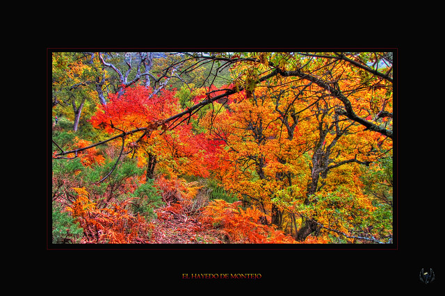 2015_10_18_Hayedo_Montejo_068