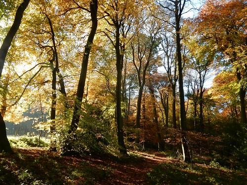 More autumn 2