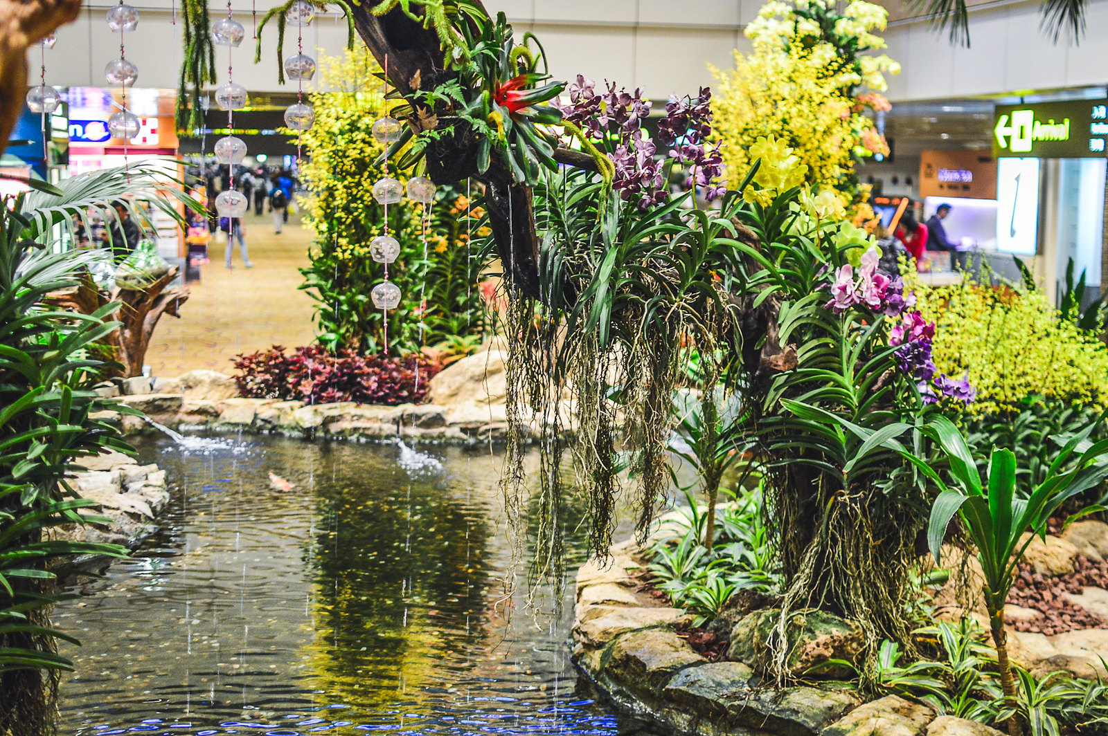 Singapore Changi Airport Orchid Garden