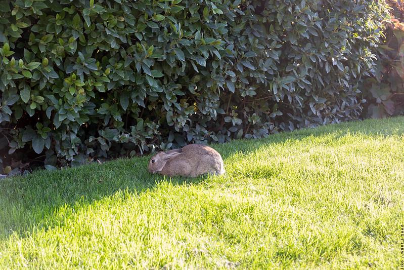Bunny, Musée Rodin