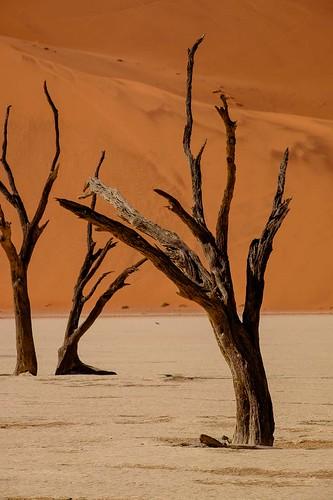 2016 africa august deadvlei hiketodeadvlei intrepid namibnaukluftpark namibia sossusvlei tour travel trip hardapregion na