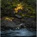A Little Piece of Autumn by Thomas Heaton