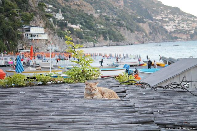 Un gatto a Positano