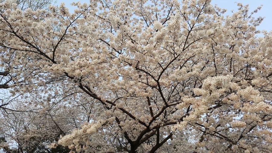 Nguyen, Anna; South Korea - Episode 12 (5)