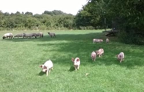 This way piggies, now POSE!
