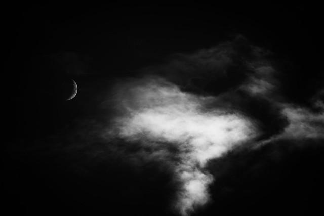 The Wild Moon