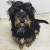 Joe! :dog::paw_prints::paw_prints: #nationaldogday #cachorro #viralata #cao #dog #serranegra #saopaulo