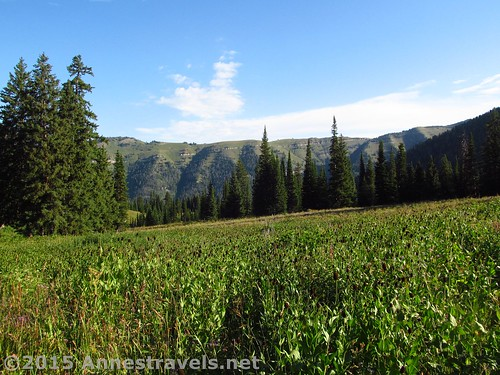 Meadows in Lower Darby Canyon, Jedidiah Smith Wilderness, Wyoming