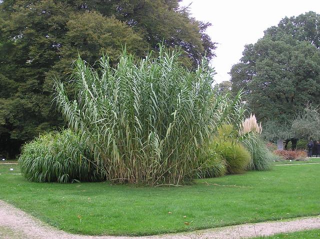 Botsanischer Garten der Universität Wien