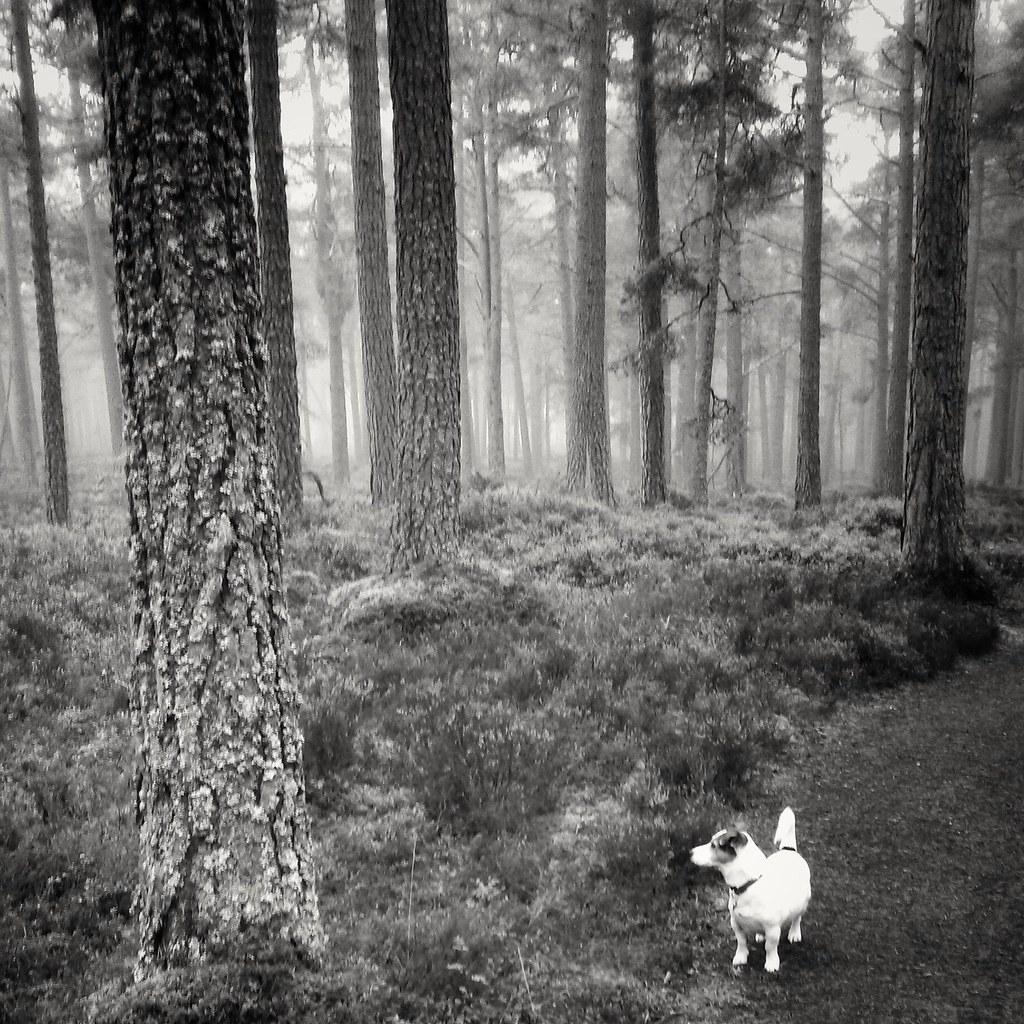 Abernethy forest, Scotland
