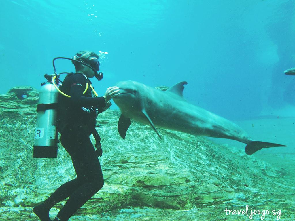 travel.joogo.sg - SEA Aquarium 8