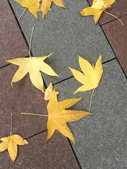 Seattle-Autumn Leaves