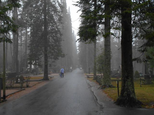 Sumuista tunnelmaa siperianpihtakujanteella, 8.11.2015 Hämeenlinna Ahveniston hautausmaa