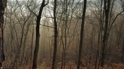 autumn trees mountain mountains fall nature weather fog forest outdoors woods warm view pennsylvania foggy samsung sunny vista hazy samsungs6 saltydogphoto