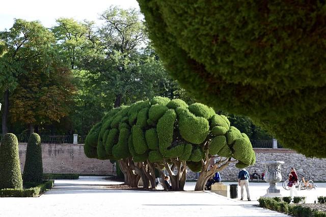 Fun Trees!!