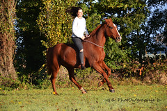 Galop - Photo of Croixrault