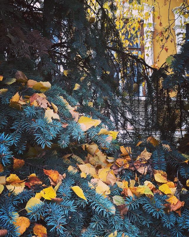 Мимикрирующий особняк.  #тюмень #autumn #осень