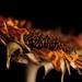 fading sunflower by barbara carroll