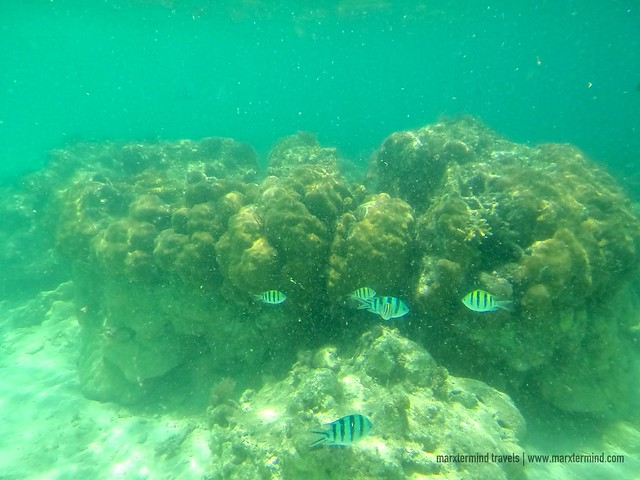 Underwater Scenery in Black Island