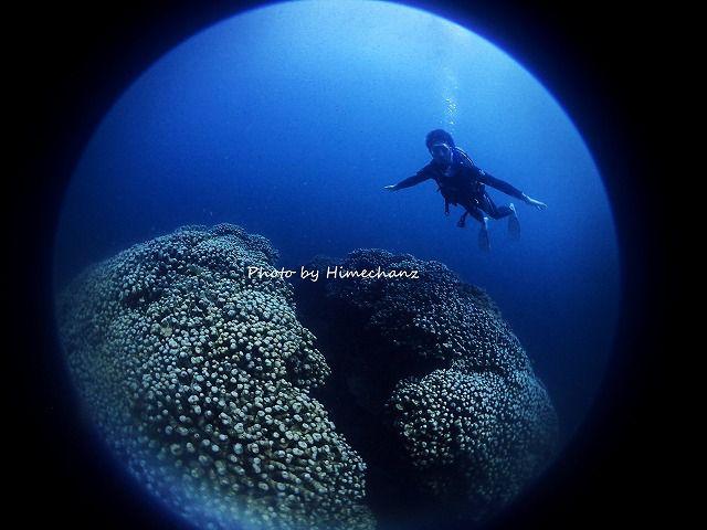 サンゴの上で、なぜかジャンガジャンガ・・・。