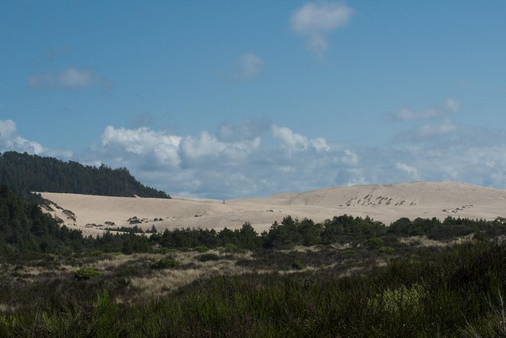 Ziolkouski Beach Park Oregon Around Guides