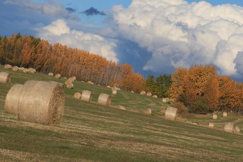 Typical Autumn Prairie (SOTC 177/365)