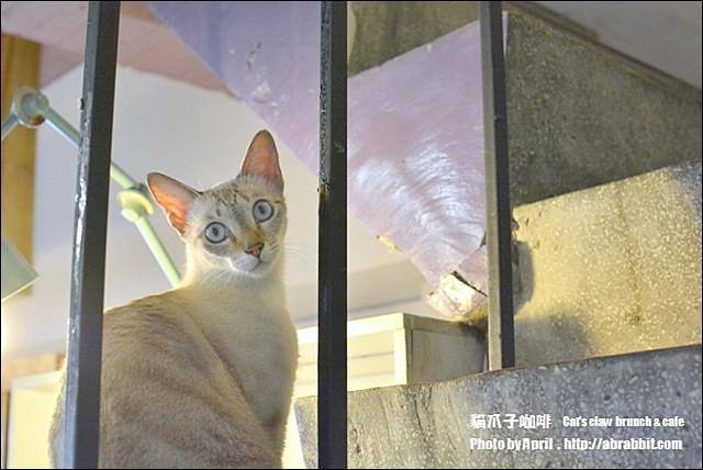 21899810794 7fba6fd866 z - [台中]貓爪子咖啡--早午餐豐盛,店內有四隻貓兒超可愛!@北區 大德街 中國醫