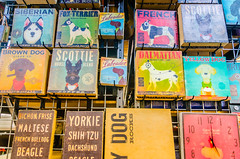 Dog-themed products at Hollywood Feed in Memphis Tennessee