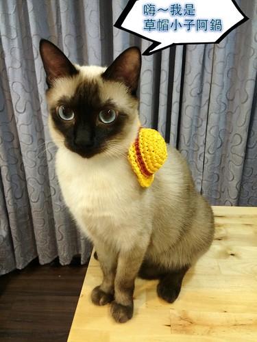 迷你夏日草帽 寵物貓咪安全項圈