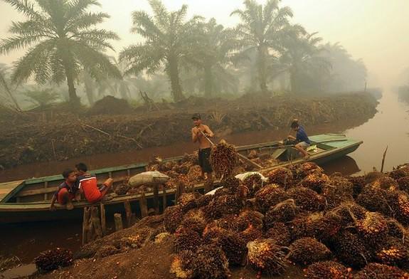 A países en desarrollo, 62 mil mdd en 2014 contra cambio climático