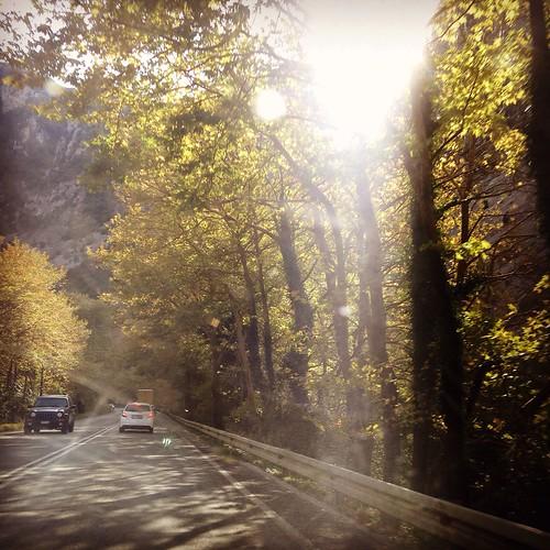 #ontheroad #trees #epirus #greece #sun