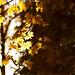 Autumn light by Lollyx34