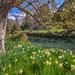 Avon River    HAGLEY PARK    CHRISTCHURCH by rhyspope