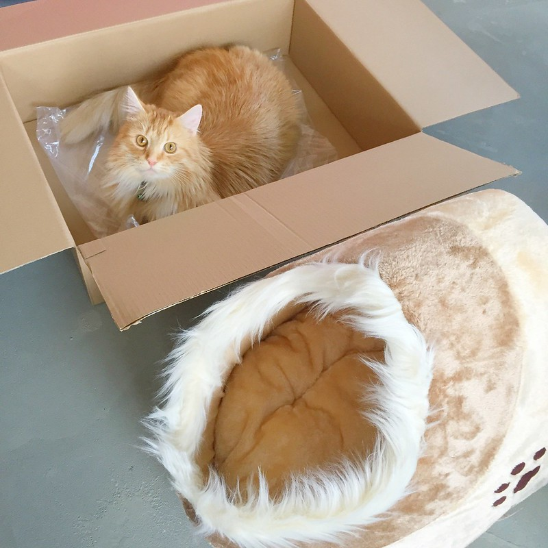 Sintra The Cat loves unboxing his Trixie Cushy Cave Minou Cat Bed