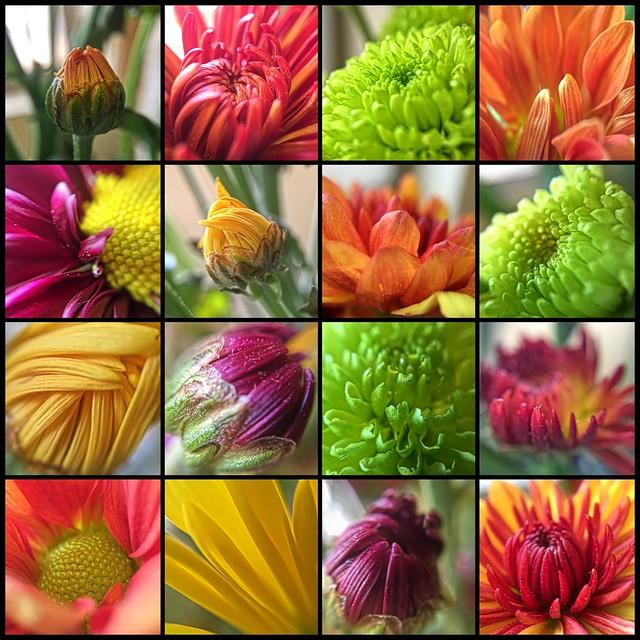 Relight Macro Flowers