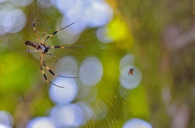 Spider attack.