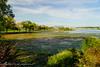 Oronoco Bay