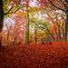 Autumn Colours [Explored] by Ulmi81